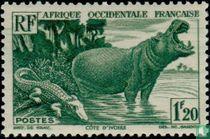 Hippo en krokodil