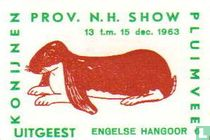 konijn: Engelse Hangoor