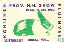 konijn: Driekleurige Hollander