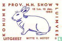konijn: Witte v. Hotot