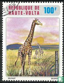 African Animal Kingdom