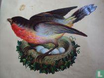 Roodbost op nest