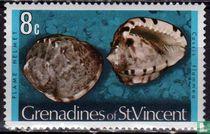 Zeeslakken en schelpen