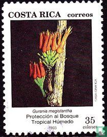 Bescherming van het tropisch regenwoud