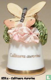 Vlinder - Callitaera Auronina