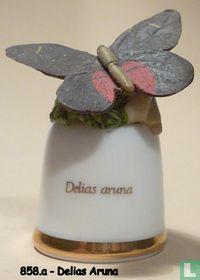 Vlinder - Delias Aruna