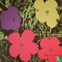 Poppy Flowers - 1967 #10