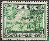 Ploegen van een rijstveld