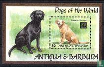 Jaar van de Hond - Grote honden kopen