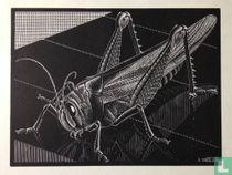 MC Escher Originele houtsnede