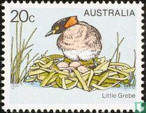 Australische dodaars
