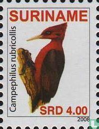 Red-necked woodpecker
