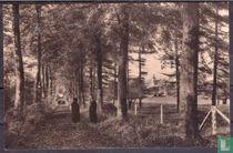 Abbaye Saint-Paul de Wisques - Une vue du parc