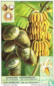 De banaan - De cocosnoot