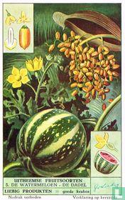 De watermeloen - De dadel