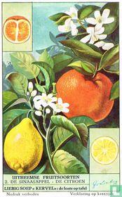 De sinaasappel - De citroen
