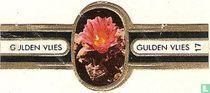 Gespleten roseocactus