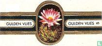 Tweekleurige knobbelcactus