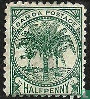 Coconut Palms