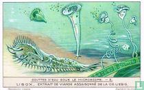 Infusoires - Stylonchia - Stentors - Vorticelles