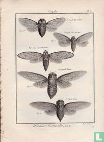 Entomologie, ou Histoire Naturelle des insectes