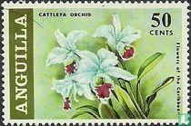 Orchids Cattleya