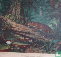 In het Braziliaanse oerwoud no.8