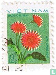 Flowers - Dahlias