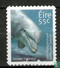 Ierland 2011 kopen
