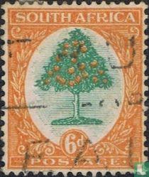 Sinaasappelboom (Engels)