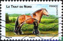 French horses