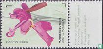 Orchidées de la Gerendal