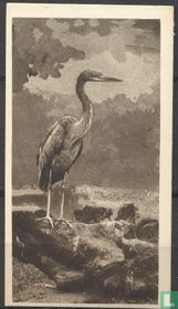 The Goliath Heron