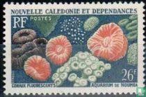 Korallen und Fischen