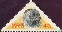 Hongaarse honden