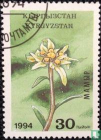 Inheemse flora