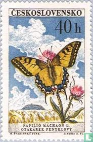 Butterflies for sale