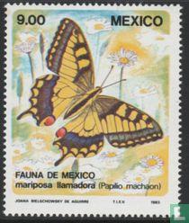 Mexico 1983