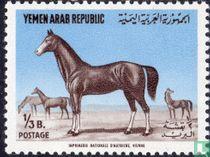 Arabische hengst