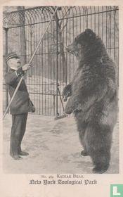 Kadiak Bear