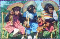 'Muzikanten'  Olé