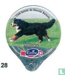 Schw.Clup für Berner Sennenhunde