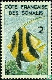 Rotmeer-Wimpelfisch