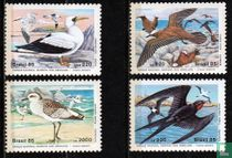 Birds from Abrolhos National Park