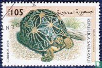 Saharaui,Republiek, reptielen