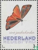 Saint James Schmetterling kaufen