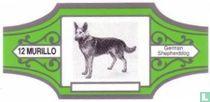 German Shepherdog
