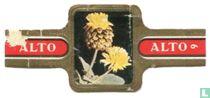 Trifolium badium