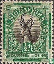 Springbok (Afrikaans)