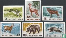 Inheemse bosdieren (ongetand)